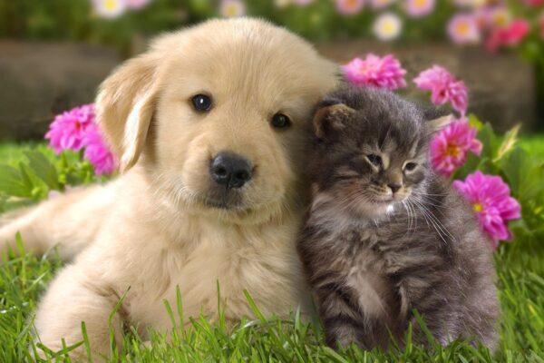 """""""Il cane e il gatto"""""""