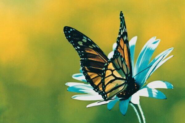 """""""La farfalla"""""""